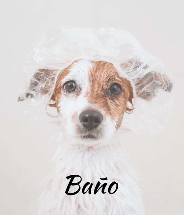 Servicios Peluqueria Canina Logrono Bano