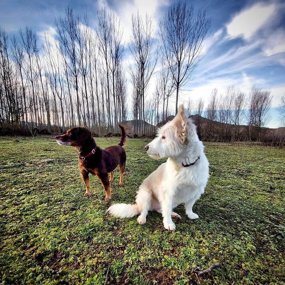 Peluqueria canina Teo y Lola